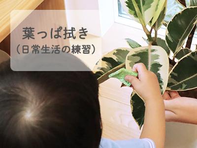 モンテッソーリ 葉っぱ拭き(日常生活の練習)